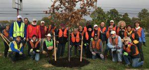 treevitalize-planting-10-26-16